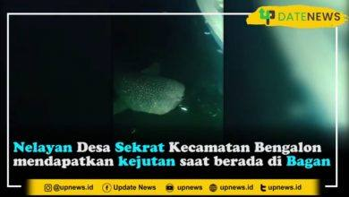 Photo of Moment Langka, Hiu Paus Muncul di Perairan Sekrat