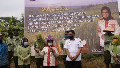 Photo of Encek Firgasih Bersama PemKab Peduli Swasembada Pangan Pasca COVID-19.