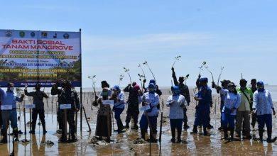 Photo of 4.500 Pohon Mangrove Ditanam Lanal Sangtta Dalam Rangka Hari Pahlawan