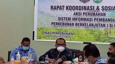 Photo of Kasmidi Minta Disbun Kutim Untuk Membentuk Satgas Pengawasan Bekerjasama Pihak Kepolisian dan TNI.