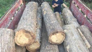 Photo of Penebang Kayu Ilegal Di Taman Nasional, Didenda Rp2,5 M
