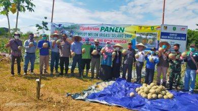 Photo of PAMA KPCB Bersama Masyarakat Bengalon Sukses Budidayakan Melon